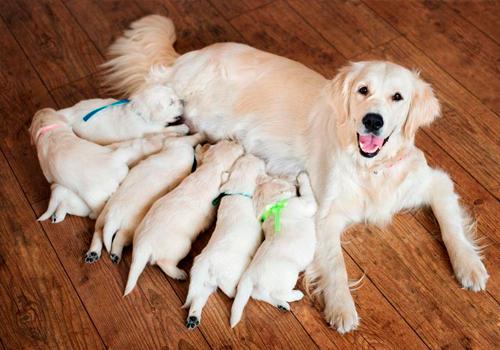 ccmel-clinica-veterinaria-ultrassom-veterinário-para-o-acompanhamento-gestacional