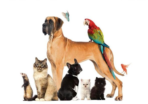 especialidades-pets
